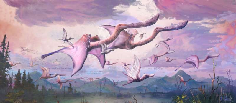 Palaeontology: Newly-hatched pterosaurs may have been able to fly