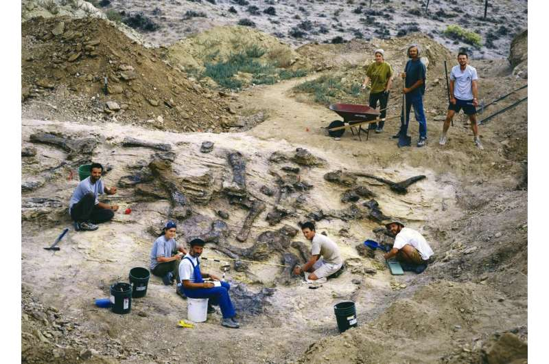 Paleontology: Microscope helps with dinosaur puzzle