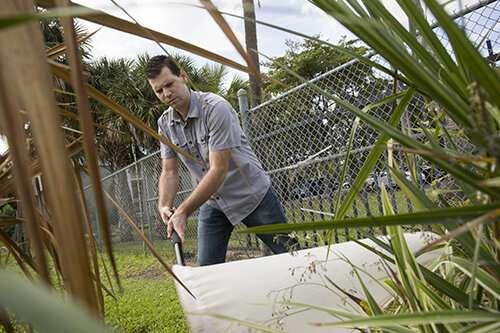 Enfermedad de las palmeras en Florida transmitida por insectos viajeros desde Jamaica