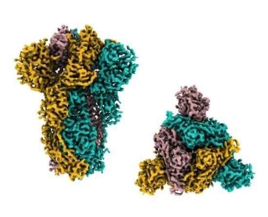 Pangolin coronavirus could jump to humans