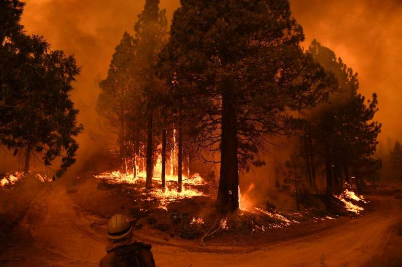 Parts of the Sequoia National Forest have burned in the most recent blazes