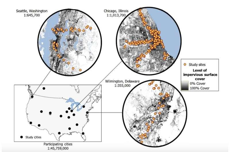 Patterns of income and urbanization impact mammal biodiversity in the concrete jungle