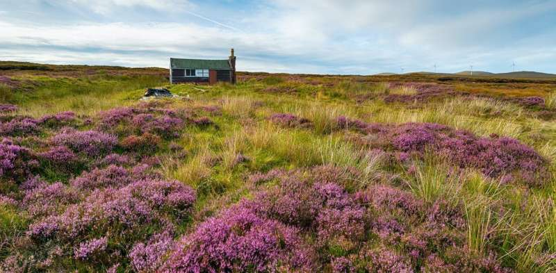 Peat bogs: restoring them could slow climate change – and revive a forgotten world
