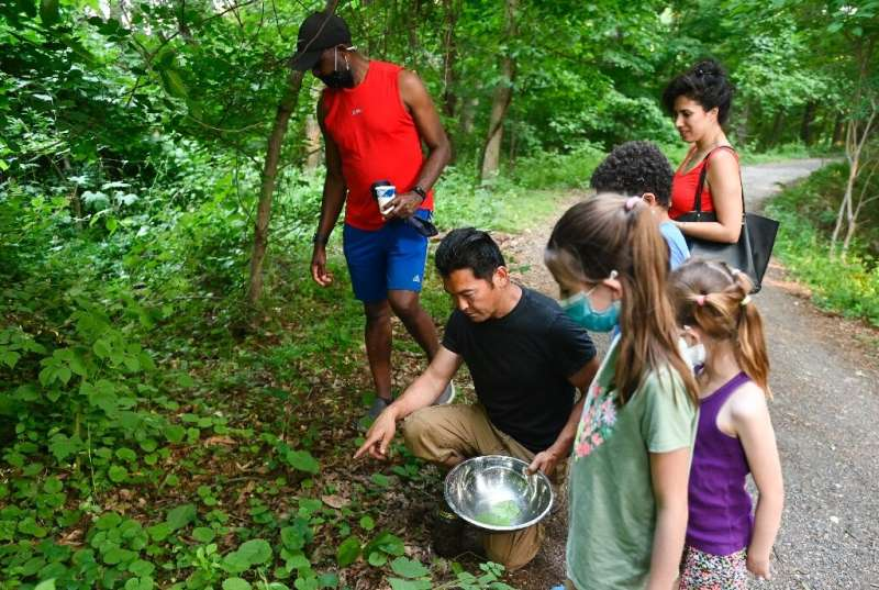 """People collect """"Brood X"""" cicadas and invasive edible plants to cook with"""