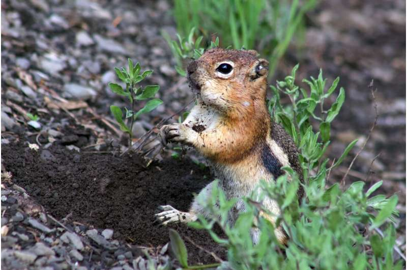 Personality matters, even for squirrels