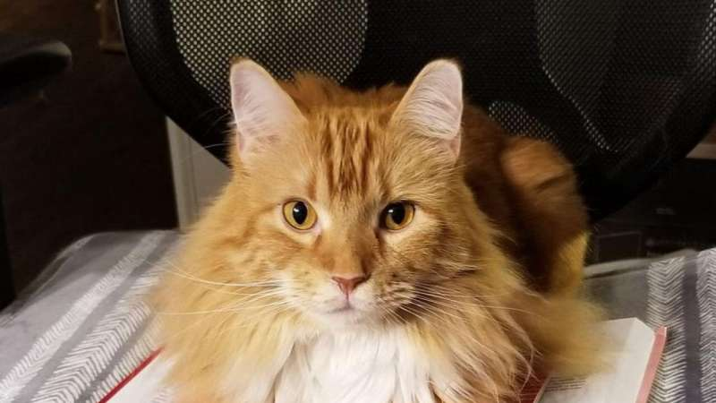 Personalized medicine for cats with heart disease