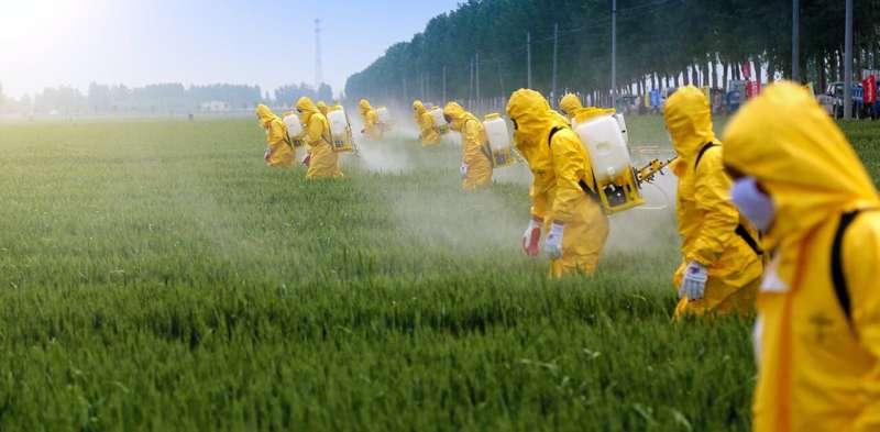 Plaguicidas: las interacciones entre agroquímicos aumentan su daño a las abejas