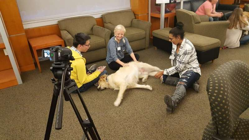 Petting therapy dogs enhances thinking skills of stressed college students