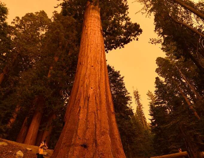 """Photographer Stuart Palley (L) takes photographs of giant sequoia trees among smoke filled skies in the """"Lost Grove"""" a"""
