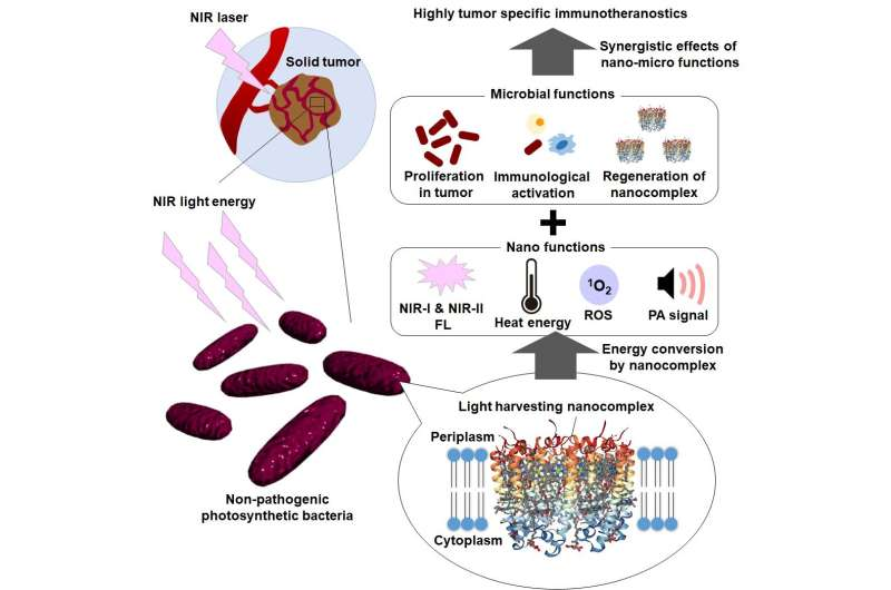 Photosynthetic bacteria-based cancer optotheranostics