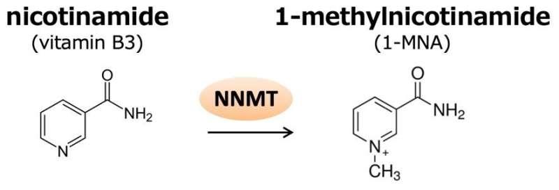 Pillar-like molecules as biosensors for metabolites