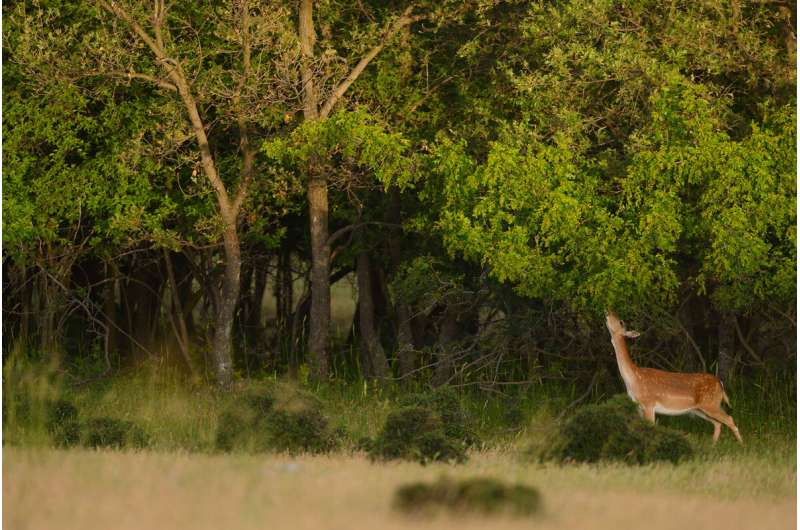 Pioneering method of assessing rewilding progress applied for the first time