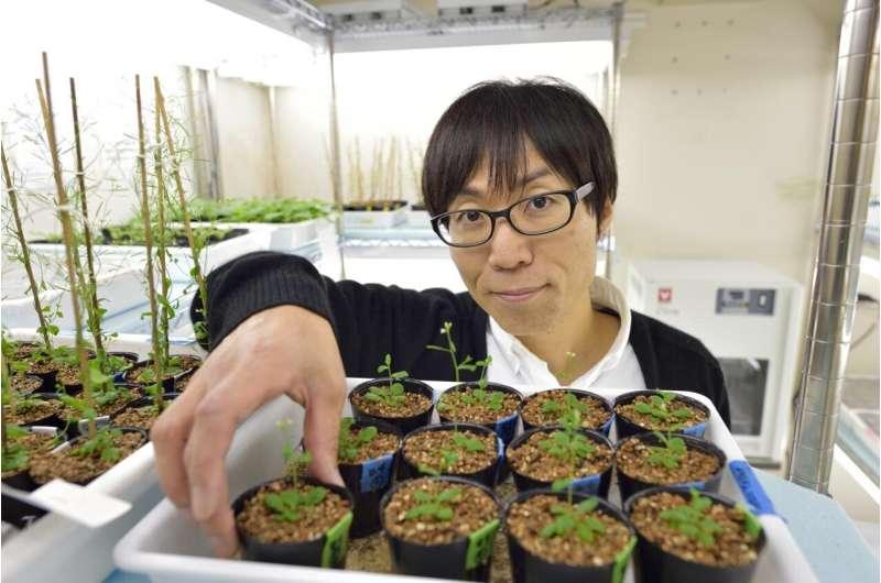 Floración de plantas en suelos bajos en nitrógeno: un mecanismo revelado