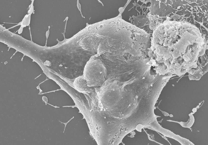 Plant immune proteins trigger cell death