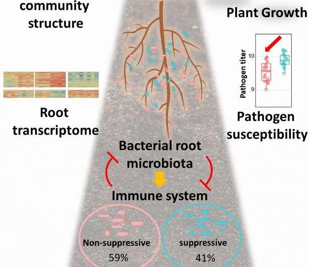 Homeostasis planta-microbio: un delicado acto de equilibrio