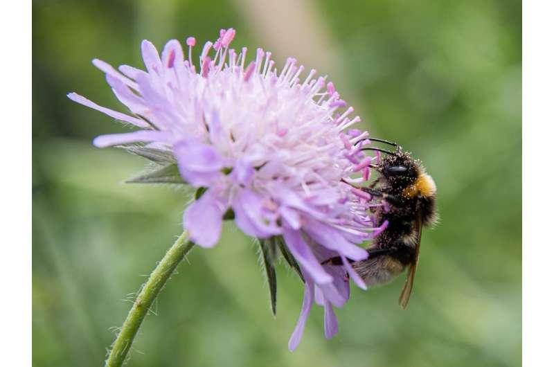 Plant provenance influences pollinators