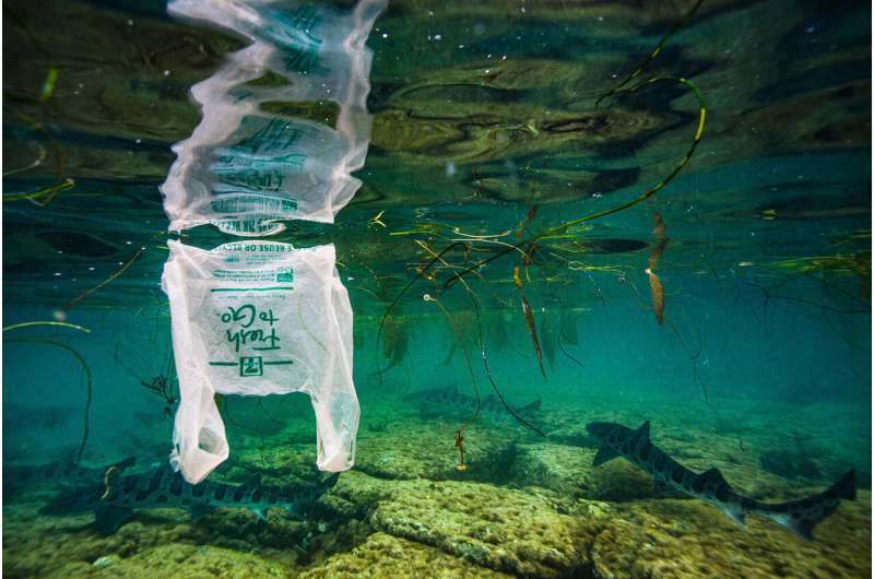 Plastic ingestion by fish a growing problem