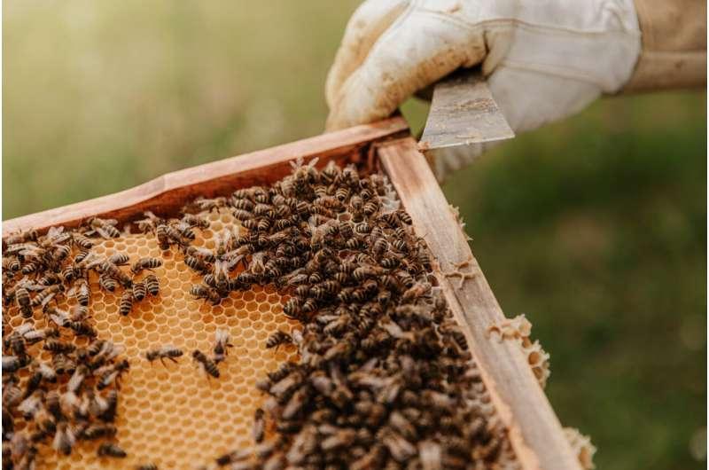 Las empanadas de polen pueden salvar a las abejas envenenadas por pesticidas