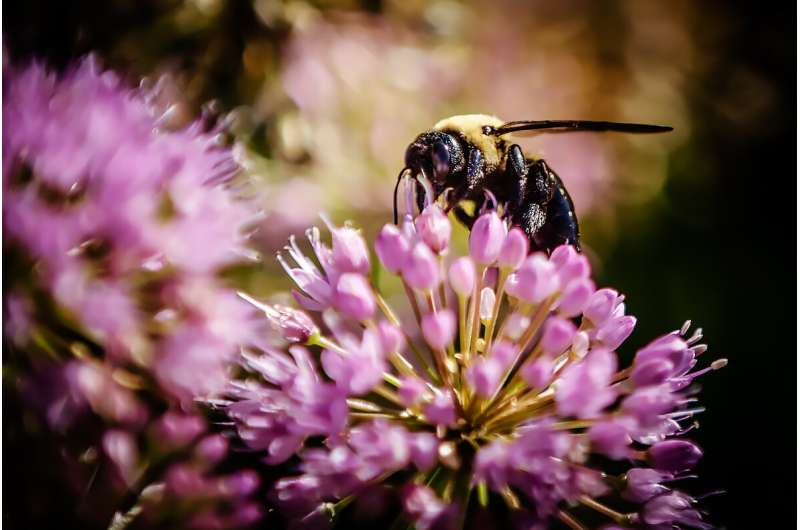 Pollinators not getting the 'buzz' they need in news coverage