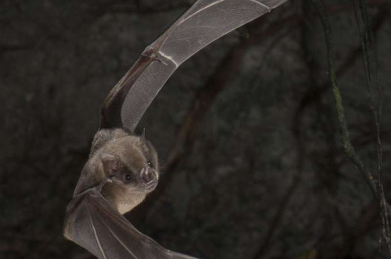 Poop core records 4,300 years of bat diet and environment