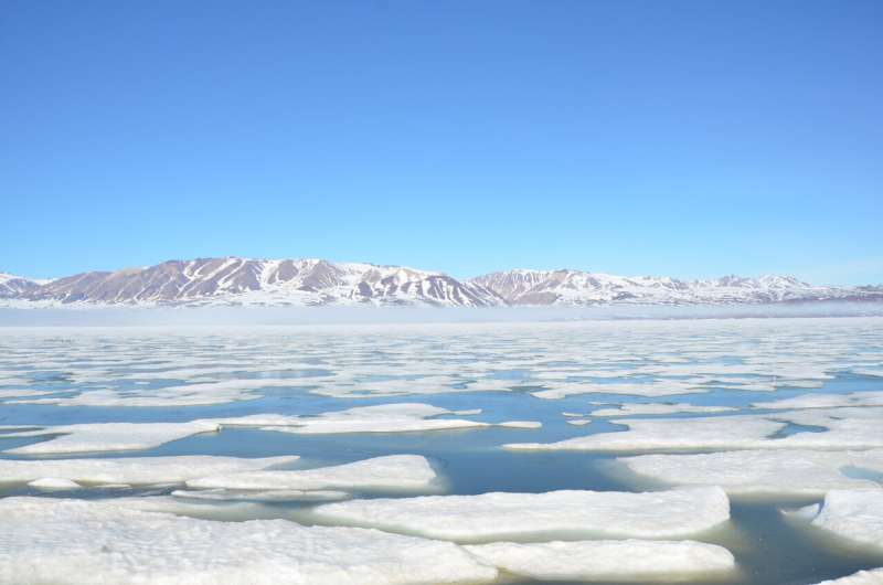 Potentially toxic plankton algae may play a crucial role in the future Arctic