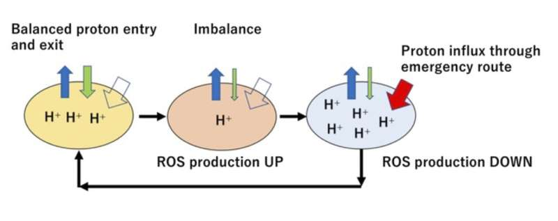 Powerhouse of the cell has self-preservation mechanism