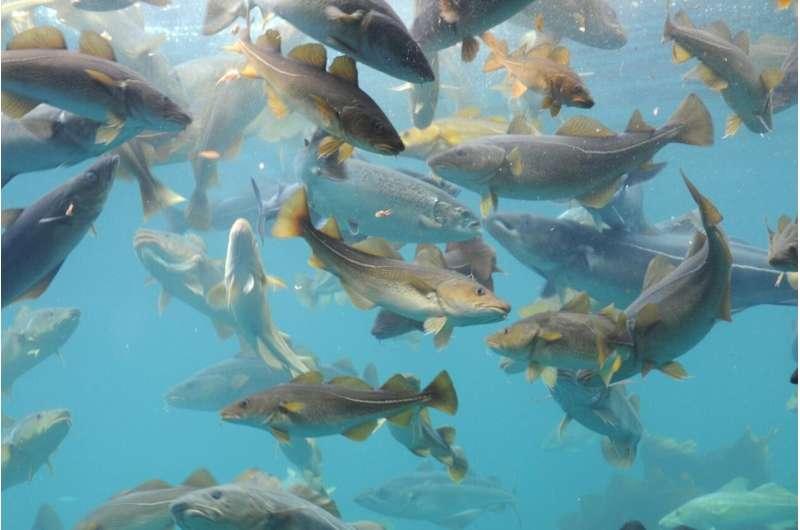 Predicting the future of cod