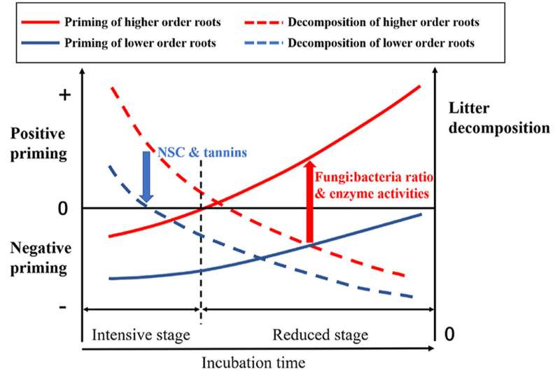 Priming effect caused by root litter varies with root order