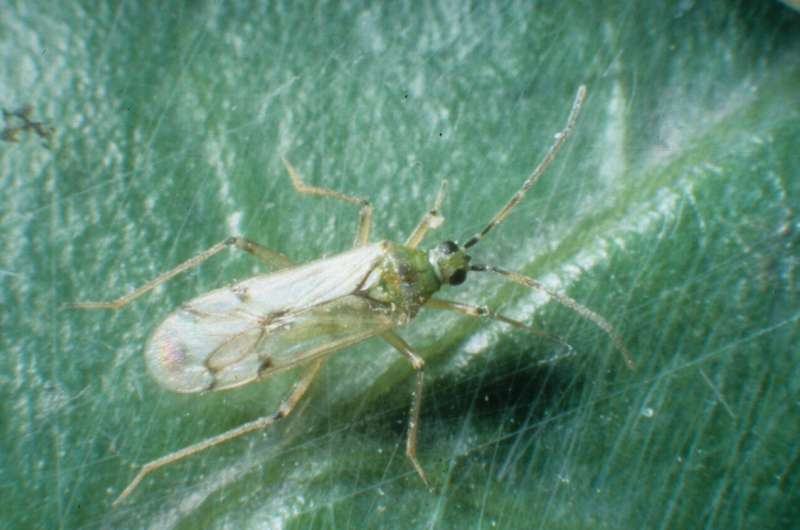 Promising biological control agents detected faster with new method