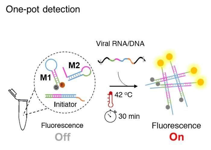 Promising low-cost method for rapid Covid detection