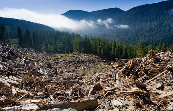 Protecting temperate old-growth rainforest is key for a sustainable future