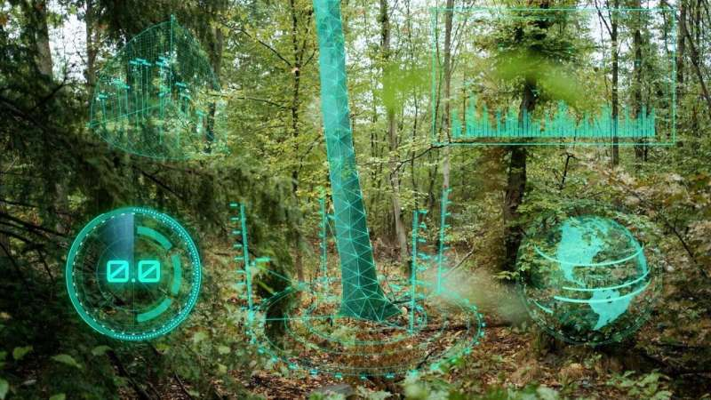 Protecting and managing forests with AI