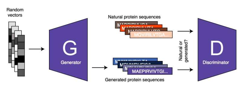 ProteinGAN: A generative adversarial network that generates functional protein sequences