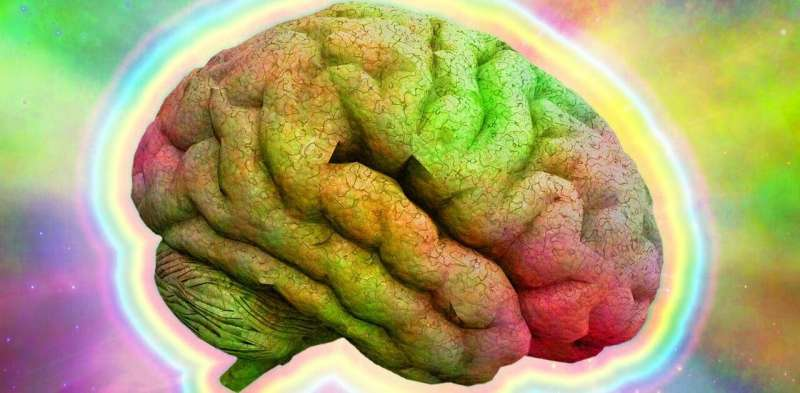Psychedelic drugs: how the brains of informed users are different