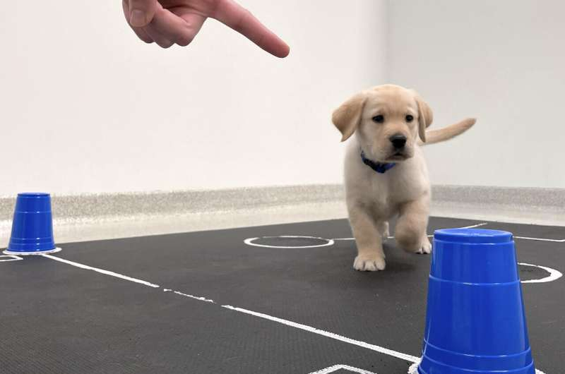Puppies are born ready to communicate with people, study shows