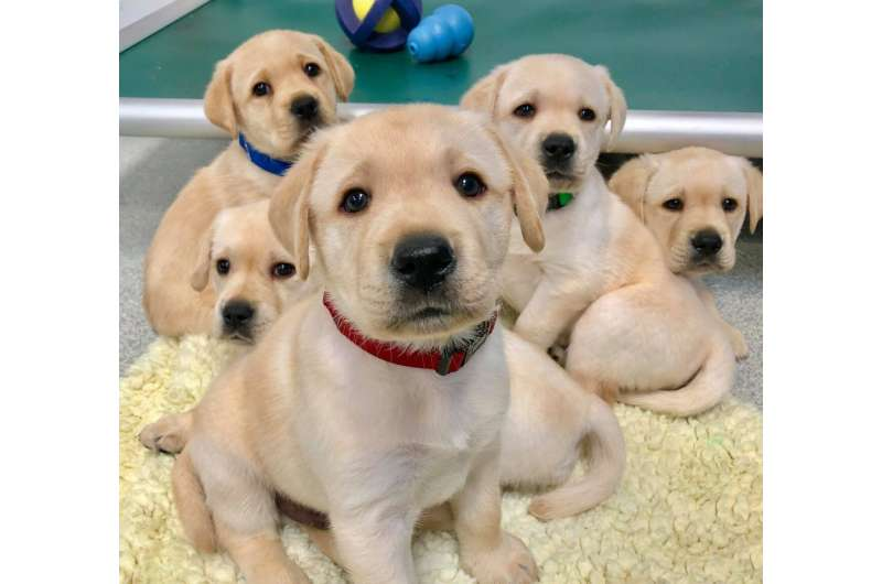 Puppies are wired to communicate with people, study shows