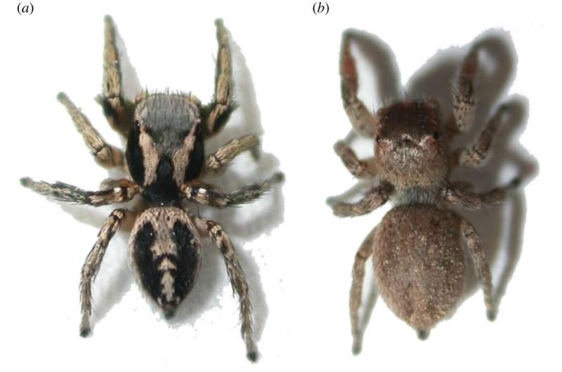Putting makeup on spiders does not change their chances of being eaten by a predator
