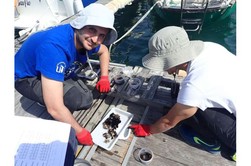 Quantifying the level of pollution in marinas
