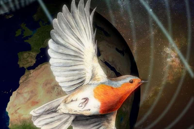 Quantum birds