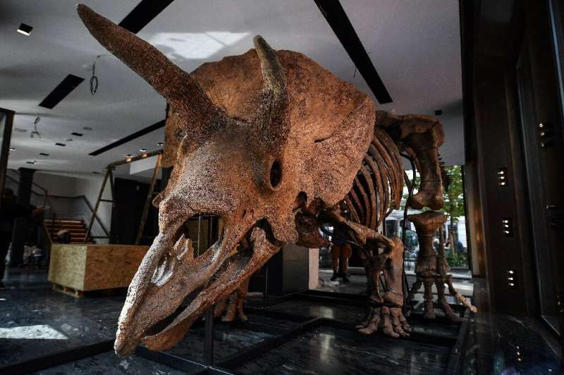 """""""Big John"""" is 66 million years old and has an eight-metre-long skeleton"""