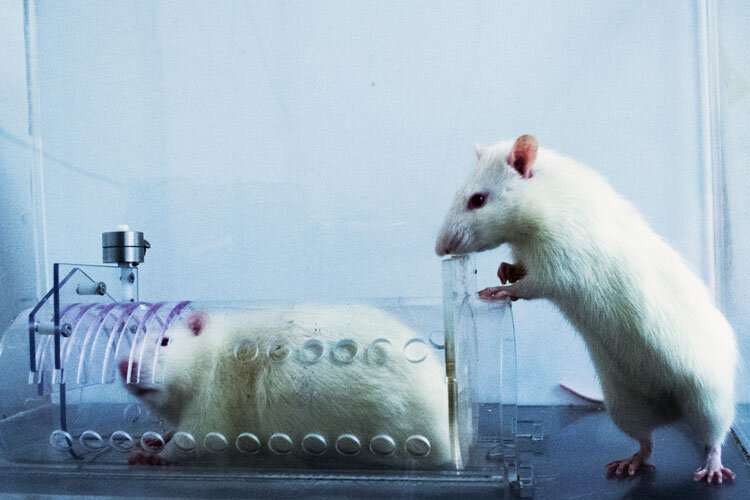 Rats prefer to help their own kind—humans may be similarly wired