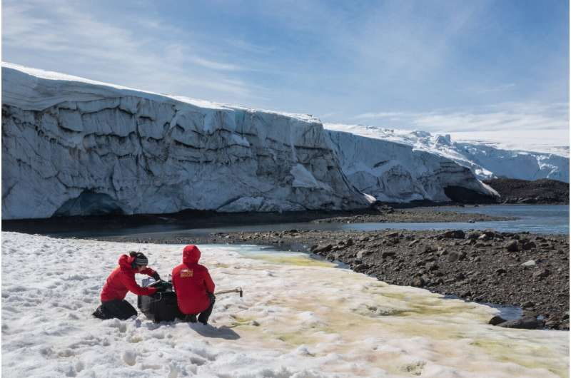 Red and green snow algae increase snowmelt in the Antarctic Peninsula