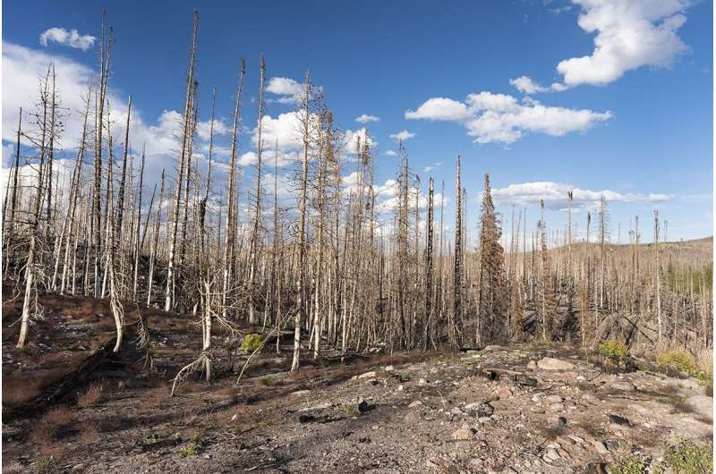 Reduced humidity increases wildfire threat in Southwest United States