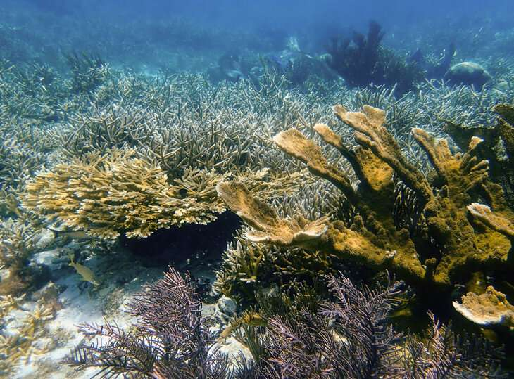 Reef-building corals and microscopic algae within their cells evolve together