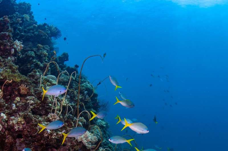 Reef fish futures foretold