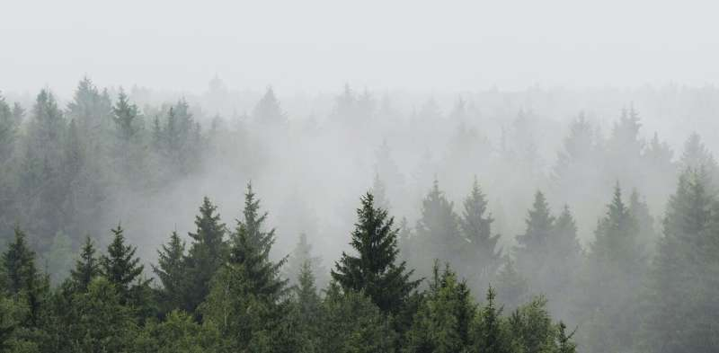 Reforesting Europe would increase rainfall – new research