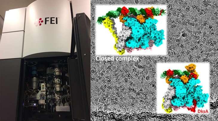 Regulating the ribosomal RNA production line
