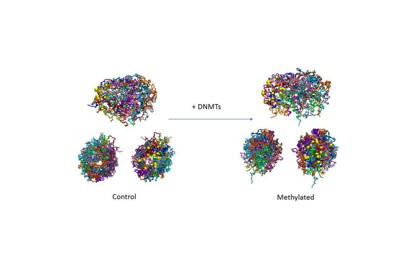 Regulation of the genome affects its 3D structure