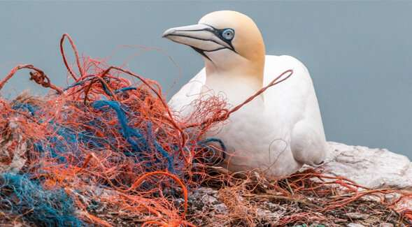 Report urges california to act to protect marine ecosystems against microplastics