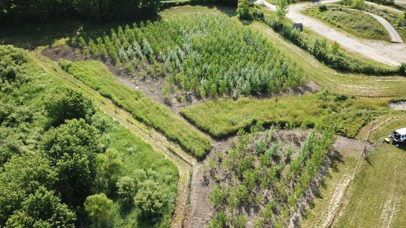 La investigación da a los árboles una ventaja en la limpieza de vertederos